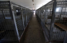 image of castration  - Cages designed for ownerless dogs found in the city - JPG