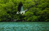 pic of langkawi  - Feeding the Eagles while traveling by boat on the Langkawi archipelago - JPG