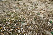 foto of butts  - Cigarette butts on the lawn of the city in the spring after the snow melts - JPG