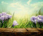 foto of meadows  - Spring background - JPG