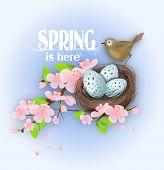 stock photo of bird egg  - Illustration of bird - JPG