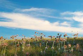 foto of defloration  - Field with deflorated flowers  - JPG