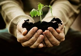 picture of nature conservation  - Gardener with vegetable seedling - JPG