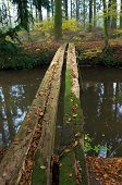 picture of primitive  - primitive bridge made out of some planking - JPG
