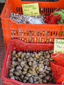 stock photo of piraeus  - Retail sale of snails in red crates on a stall of Piraeus port near Athens in Greece - JPG