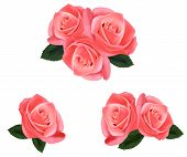 Beautiful pink roses with leaves isolated on the white background. Photo-realistic vector illustrati