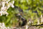 Dragonfly On A Summer Background