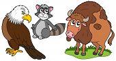 North American animals collection - vector illustration.