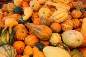 foto of cornicopia  - Pumpkin Patch Goodies - JPG