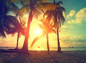 Sunset Beach with palm trees and beautiful sky. Tourism, travel, vacation concept background. Mexico poster