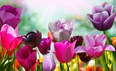 image of beautiful flower  - Beautiful spring flowers - JPG