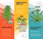 Vector Cannabis Leaves, Green Weed, Hemp Icon poster