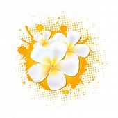 Flower Background With Frangipani, Vector Illustration