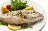 picture of red snapper  - grilled red snapper - JPG