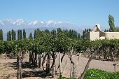 picture of aconcagua  - vineyard with modern building Mendoza Argentina and Andes mountain - JPG