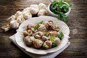 bourguignonne snail au gratin