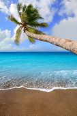 Canary Islands brown sand beach and tropical aqua water with palm tree