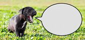 Puppy With Speech Bubble