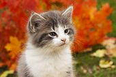 Kitten In The Fall