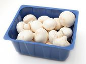 Button mushrooms, Agaricus bisporus, the common, champignon, crimini, white or table mushroom, in a supermarket tray, on white with a light shadow