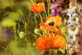Retro Poppies And Larkspur