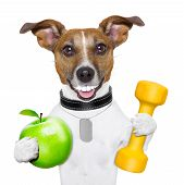 picture of light weight  - healthy dog with a big smile and a green apple - JPG