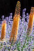 Bright Delphinium Flower
