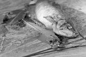 stock photo of life after death  - Dead fish found after flooding in reverside - JPG