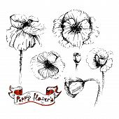 Poppy flowers sketches in different positions