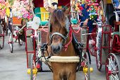 Horse carriages for tourist services in Lampang