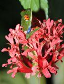 Green Frog Flower 1