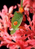 Green Frog Flower 2