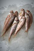 foto of mullet  - Fresh fish mullet on ice as a background - JPG