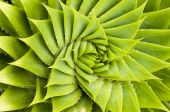 grüner Kaktus