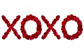 Red dried rose petals arranged into xoxo