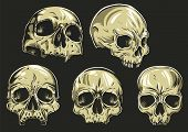 stock photo of skull bones  - set of 5 skulls - JPG