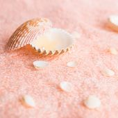 Still Life Seashells And Pearl On Delicate Pink Terry Texture, Closeup