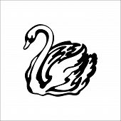 Silhouette Of Swan
