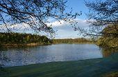 Branch Over Lake With Duckweed