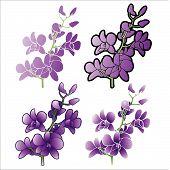 Orquídeas roxas