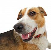 Mongrel Stray Dog