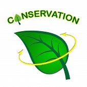 Leaf Conservation Represents Go Green And Conserving