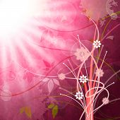 Sun Rays Means Flower Flowers And Pink