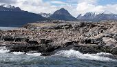 Ushuaia Landscape - Cormorants on Large Rock Formation
