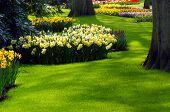 Tuin In het voorjaar van