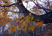 Fall Color Shenandoah National Park Virginia
