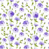 picture of chicory  - Chicory seamless pattern on white background - JPG
