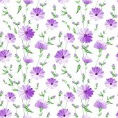 stock photo of chicory  - Chicory seamless pattern on white background - JPG