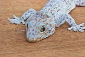 Closeup Of Gecko On The Wood Wall