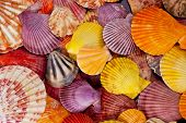collection of various colorful seashells on black background